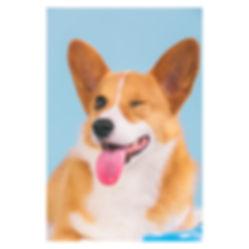 Cooper_-4.jpg