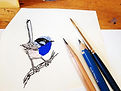 blue wren2.jpg