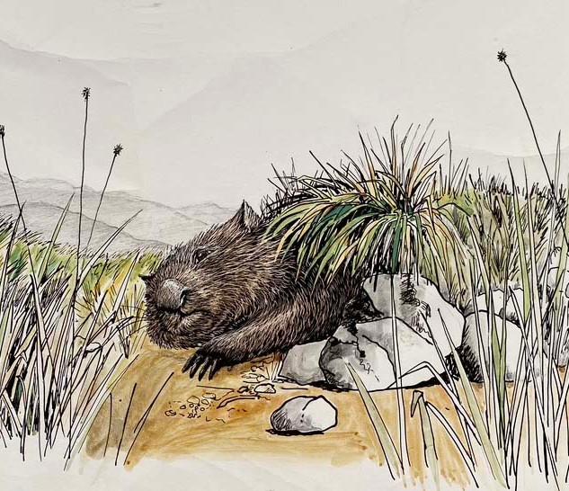 wombat burrow.jpg