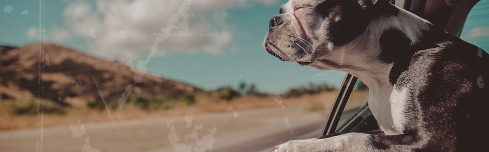 Dognerd - passeio - pet - capa automotiva - capa pet carro - lider da matilha