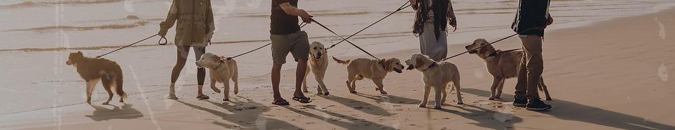 Dognerd - Bolsa - petshop - zeedog - praia com cachorro - good vibes
