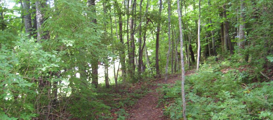 Disc Golf Course Trail 15.JPG