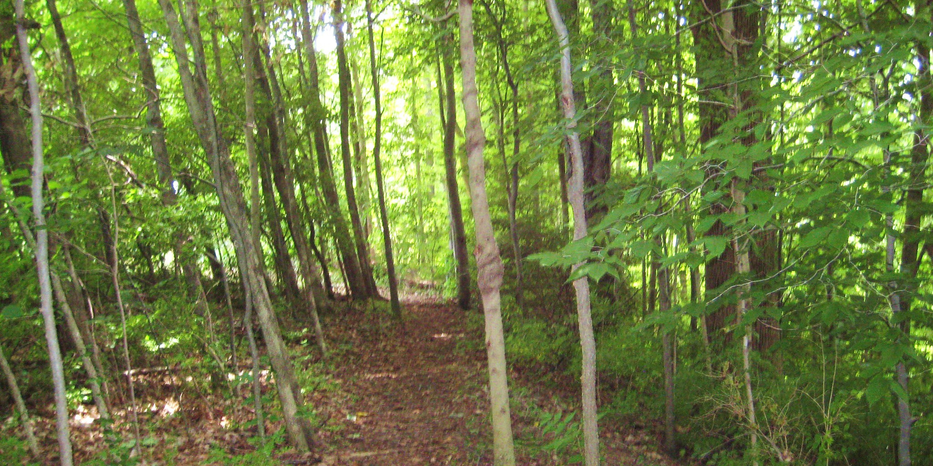 Disc Golf Course 14.JPG