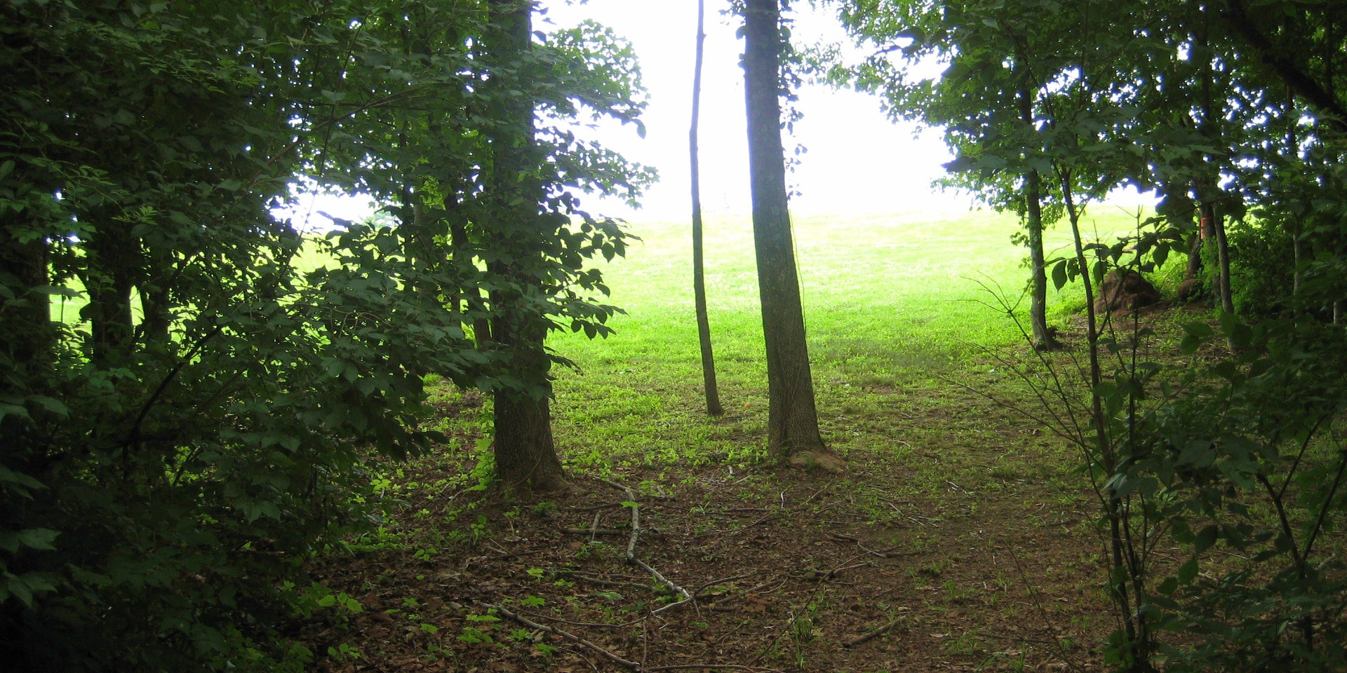 Disc Golf Course Forest.JPG