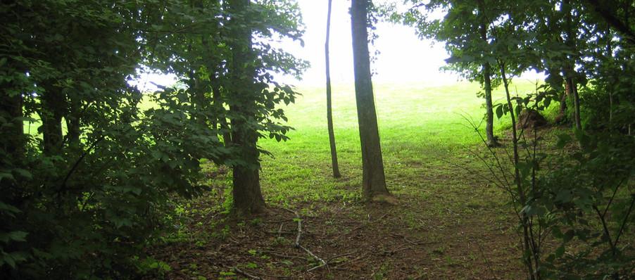 Disc Golf Course Forest.JPG
