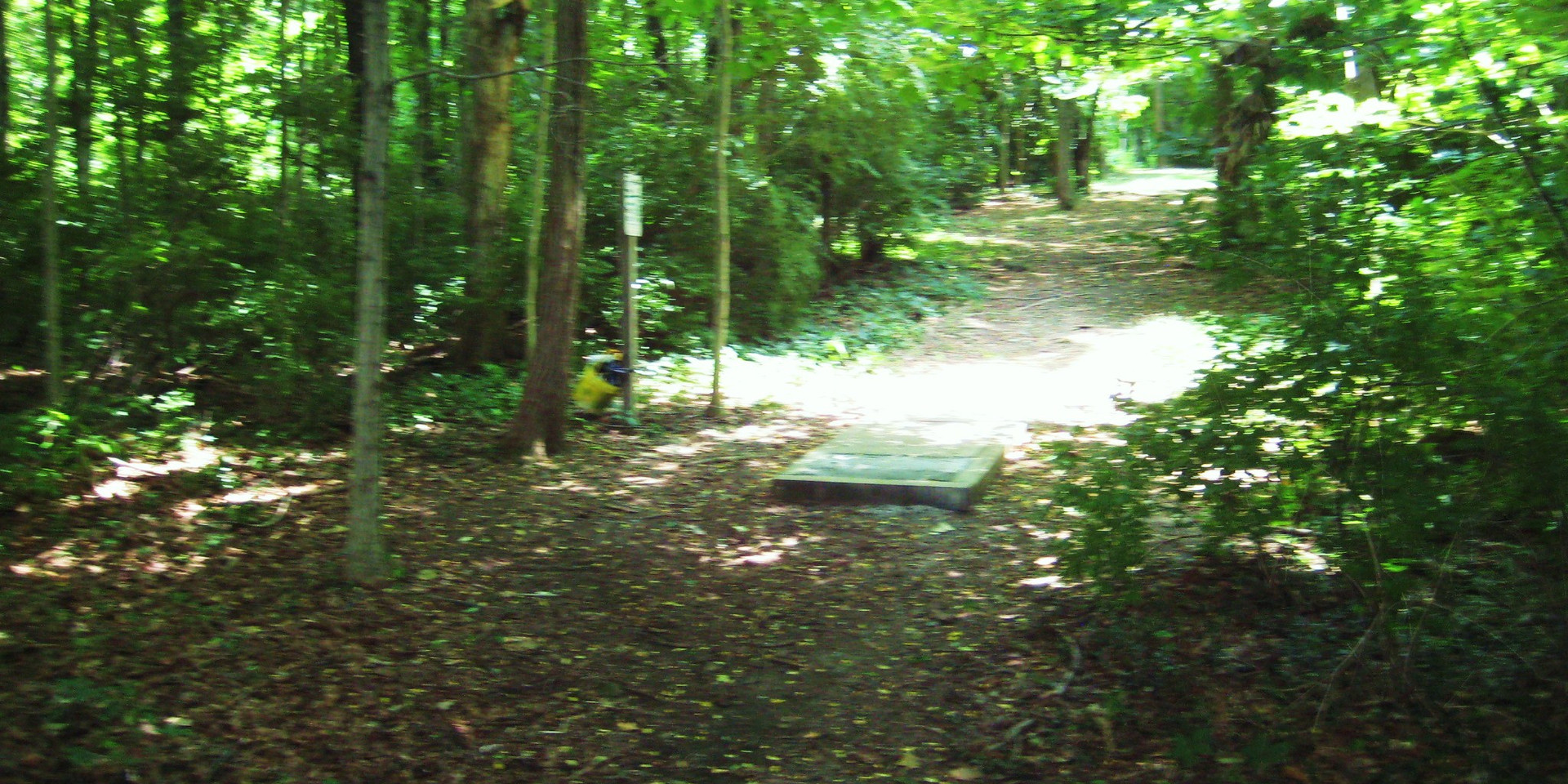 Disc Golf Course Trail 11.JPG
