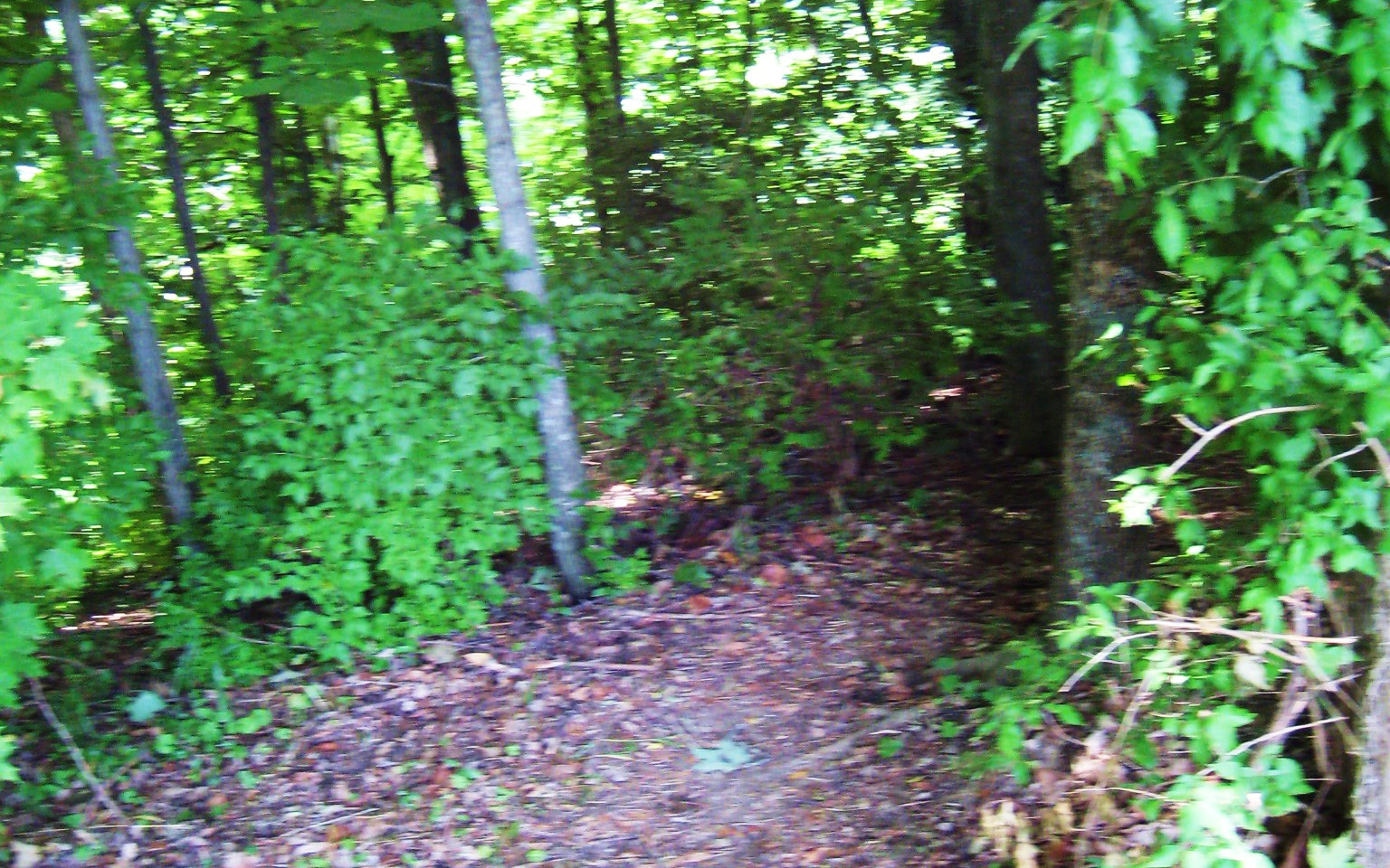 Disc Golf Course Trail 12.JPG