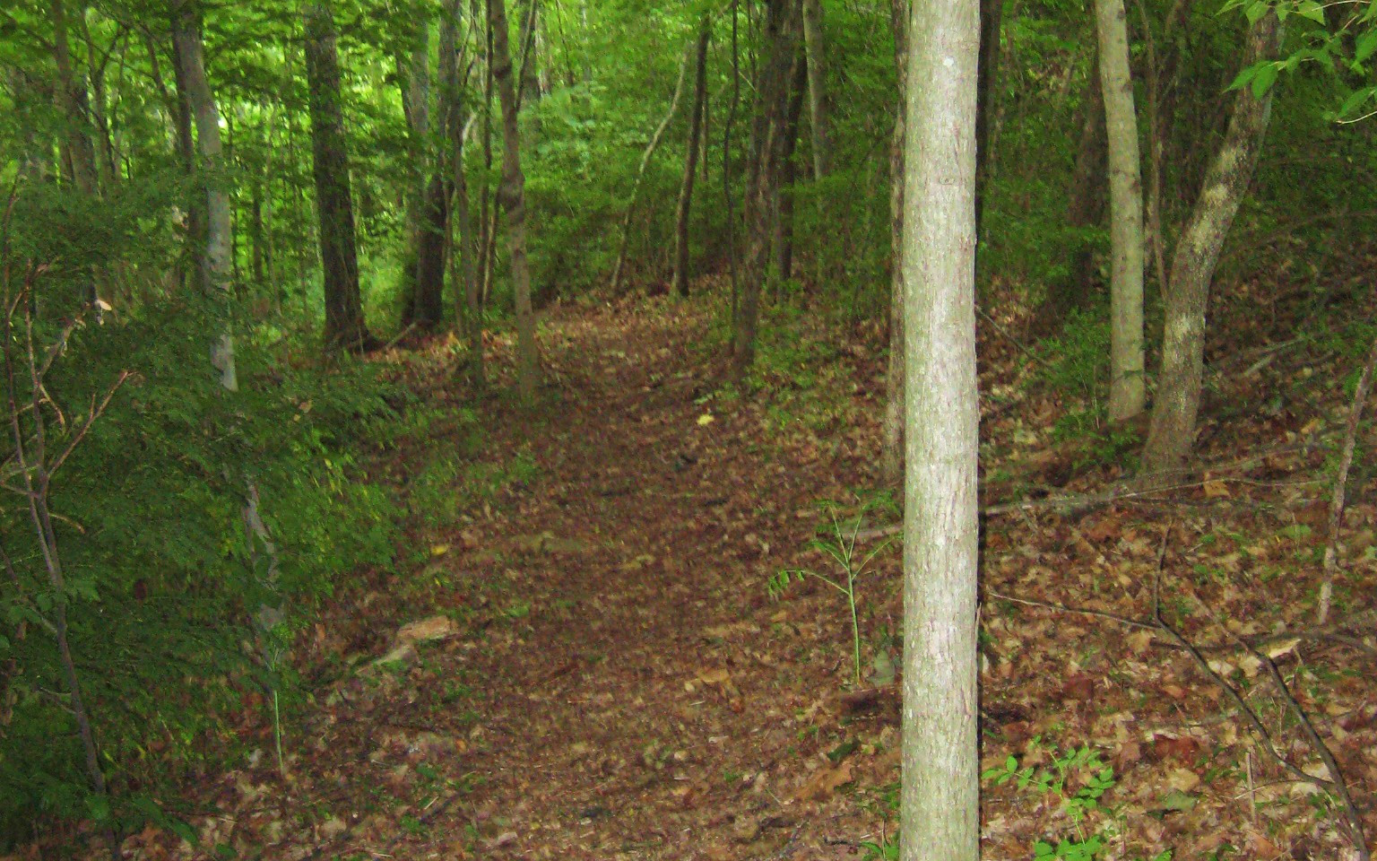 Disc Golf Course Trail 13.JPG