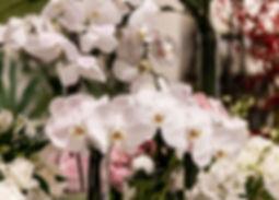 카페도밍고_꽃