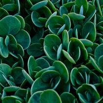 leaves .jpg