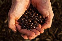 coffeehands.jpg