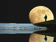 3 ressources florales pour tirer le meilleur parti de l'énergie de l'éclipse lunaire