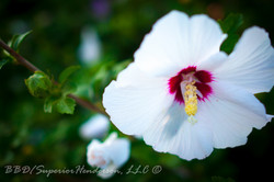 MorningFlowers09062016-1-2
