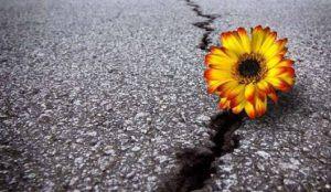Le sourire de la Résilience            Comment reconstruire son monde émotionnel