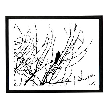 Solitary Crow