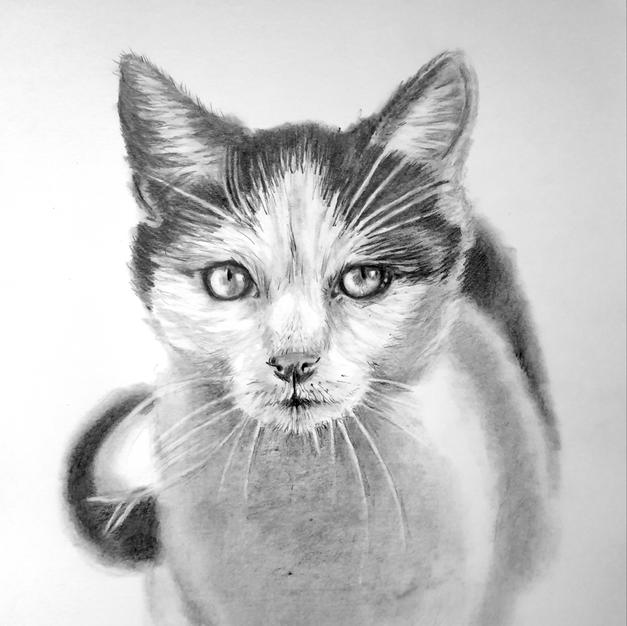 Pet Portraits & Pet Studies (Clients)