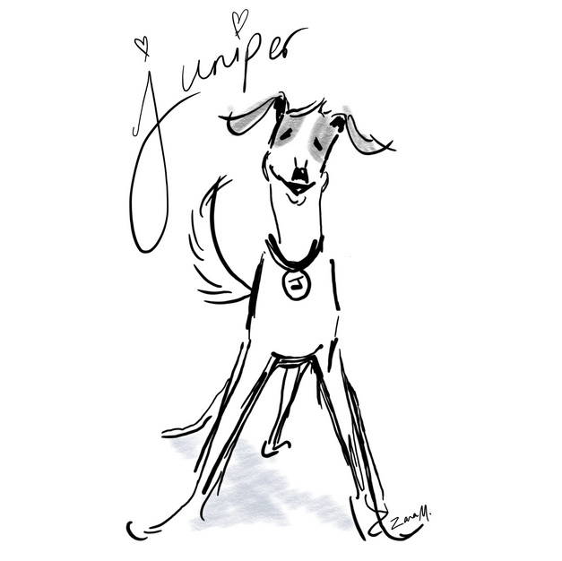 Juniper's Dog Blog