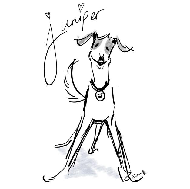 Juniper's Dog Blog