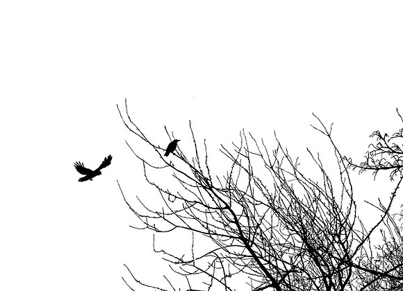 Crows And A Tree