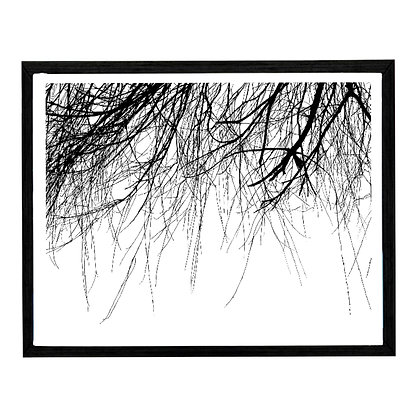 Wispy Branches