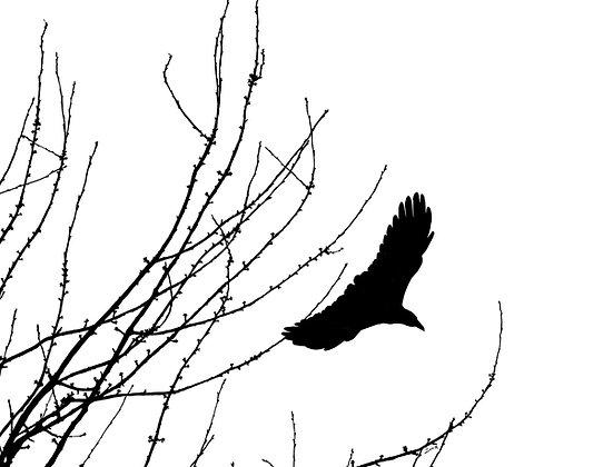 Swooping Crow & Tree