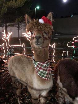 Christmas Entertainment