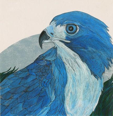hawk and the linnet.jpg