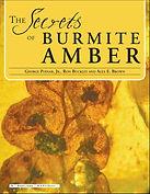 Secrets of Burmite Amber