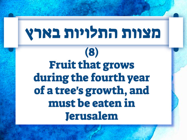 Israel Panoply.040.jpeg