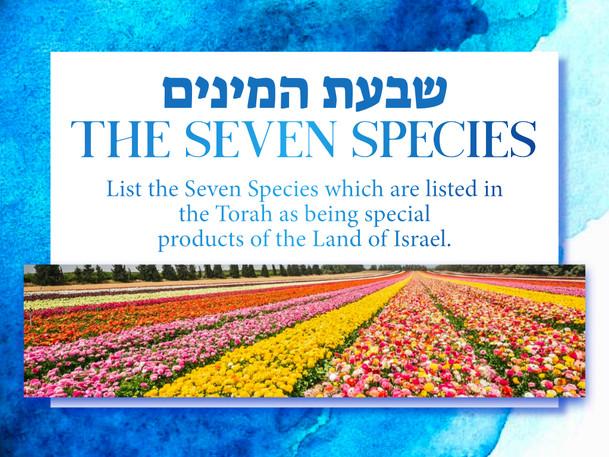 Israel Panoply.031.jpeg