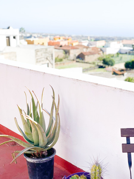 Cactus at a white wall with a view