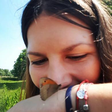 Joli papillon d'été