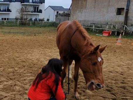 """Ode aux chevaux """"compliqués"""""""