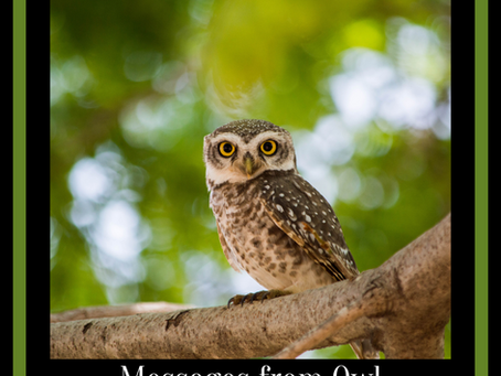 Messages & Medicine from Owl
