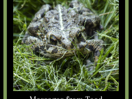 Messages & Medicine from Toad