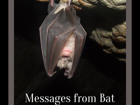 Messages & Medicine from Bat
