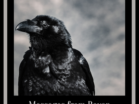 Messages & Medicine from Ravens