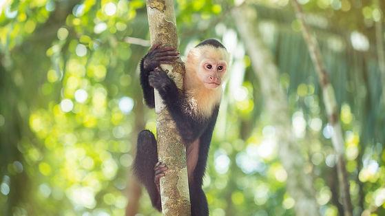 Eco Era Monkey