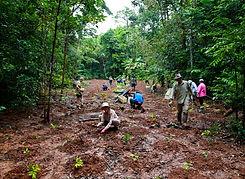 Eco Era Reforestation