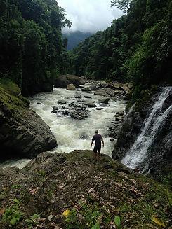Wildland Cooperative Rainforest