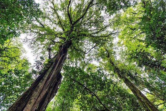 Eco Era Rainforest