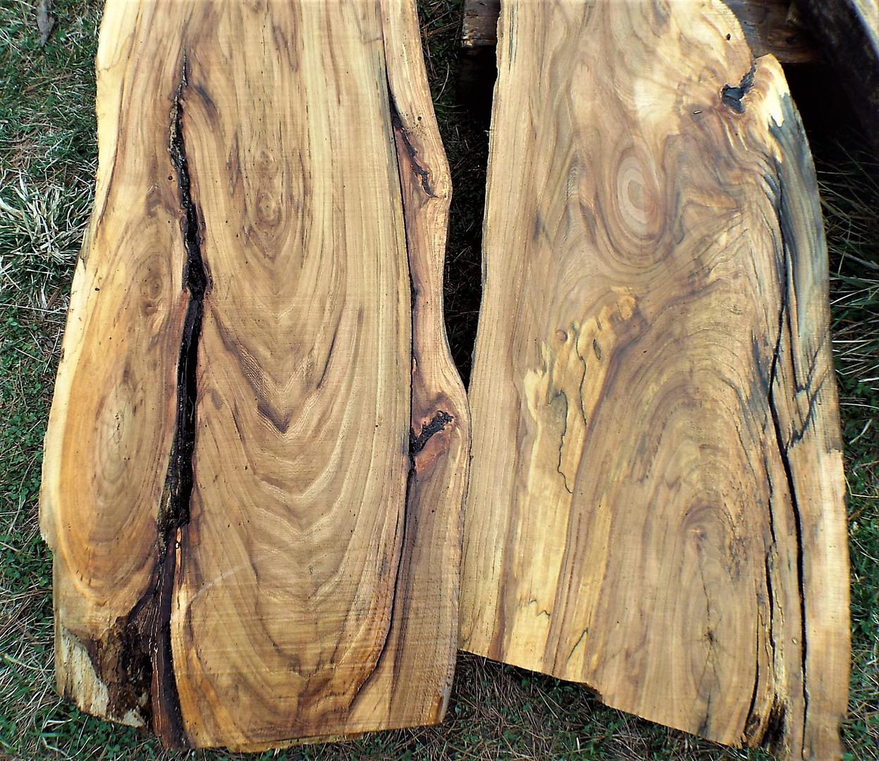 Beetle killed elm slabs