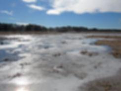 Wetland IMG_4462.jpg