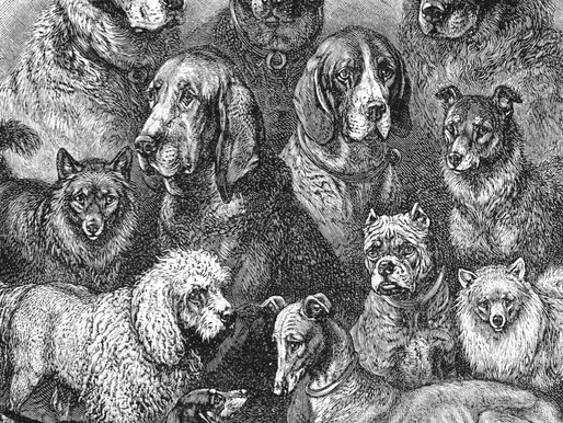 Vintage Canine Culture: Dogs and Kennels of Indian Royals with BHUMENDRA PAL SINGH of AWAGARH