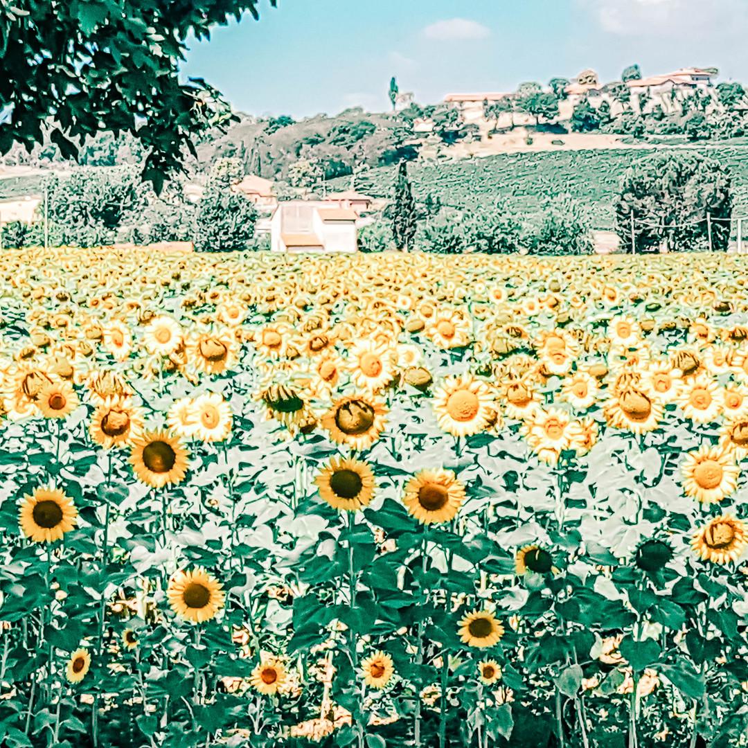 Nähe Montepulciano