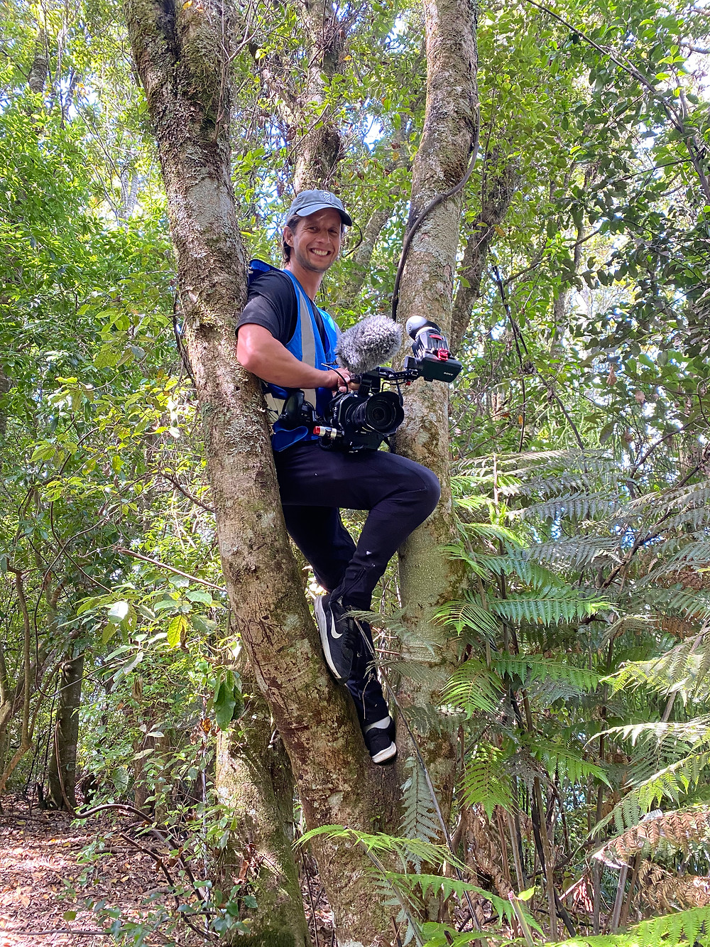 Climbing trees to get the shot at the Tarawera Ultramarathon, filming for Kinetic Media.