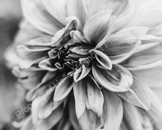 Paris Floral Digital Set