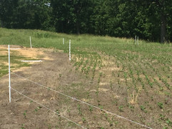 Protect your food plots
