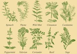 Medicinal Plants for Protecting Body, Mind and Soul