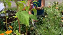 SpiritWorks Herbal Education